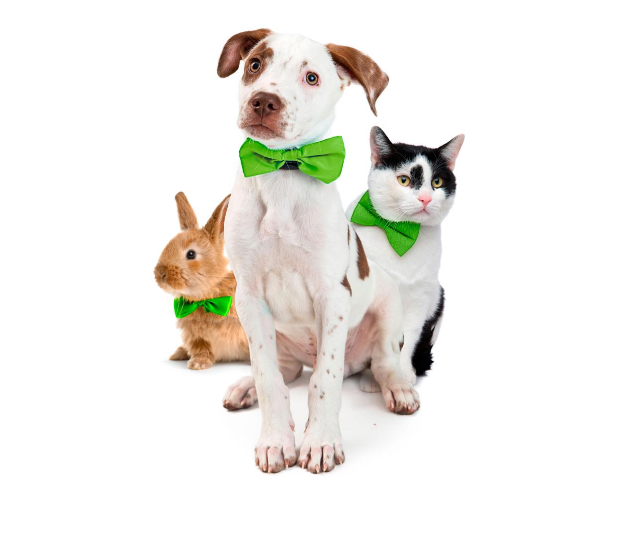 DOA hond, kat en konijn